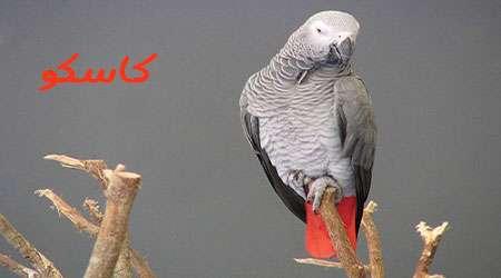 زندگی زیبای طوطی