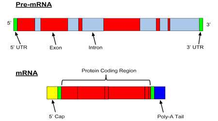 فرآیند مولکولی (بخش اول)