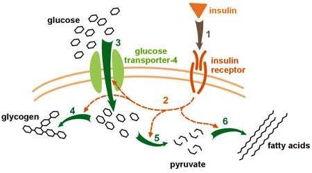 پروتئین چیست؟ (بخش سوم)