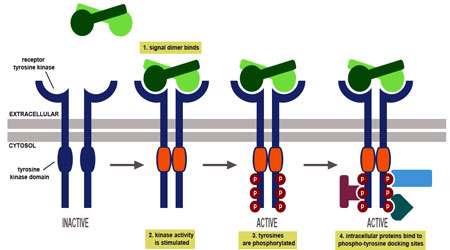 پروتئین چیست؟ (بخش اول)
