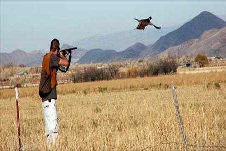 شکار با تفنگ