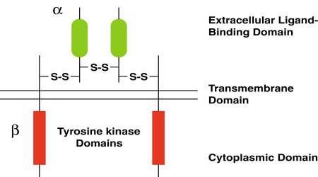 اتصال لیگاند به گیرنده (بحش اول)