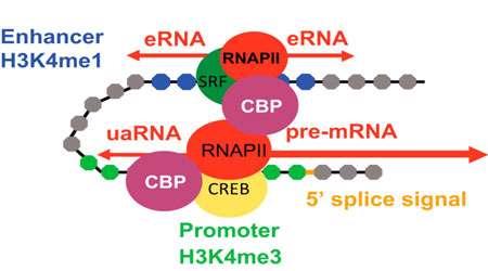 فرآیند مولکولی (بخش سوم)