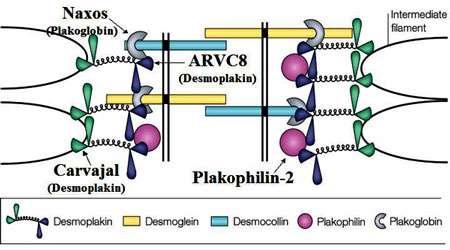 اتصالات سلولی (بخش سوم)