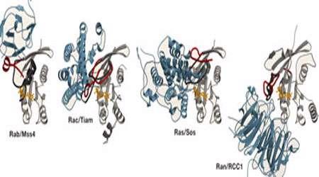 پروتئین های سوئیچ
