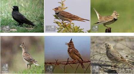 تشخیص پرنده حلال گوشت از حرام گوشت