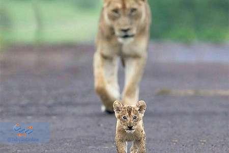 دیدنیهای حیات وحش(10)