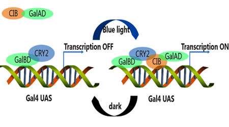 فرآیند مولکولی (بخش دوم)