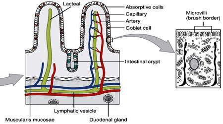 اتصالات سلولی (بخش اول)