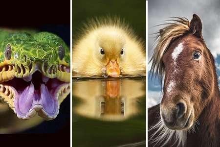 دیدنیهای حیات وحش(6)
