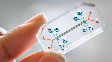 طراحی و ساخت تراشه های میکروفلوئید یکی با الهام از طبیعت و صنعت