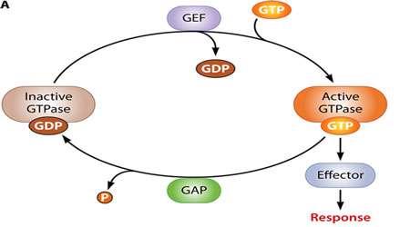 پروتئین کینازهای گیرنده (بخش سوم)