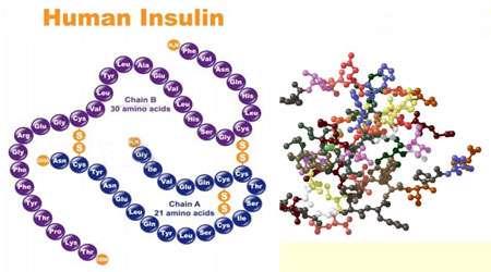 پیام رسانی انسولین