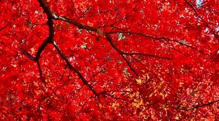 رنگ قرمز