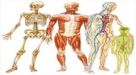 شگفتیهای جهان: استخوانبندی سازمان بدن