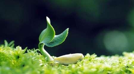 بررسی اثر ذغال فعال به عنوان بهبود دهنده رشد گیاهان