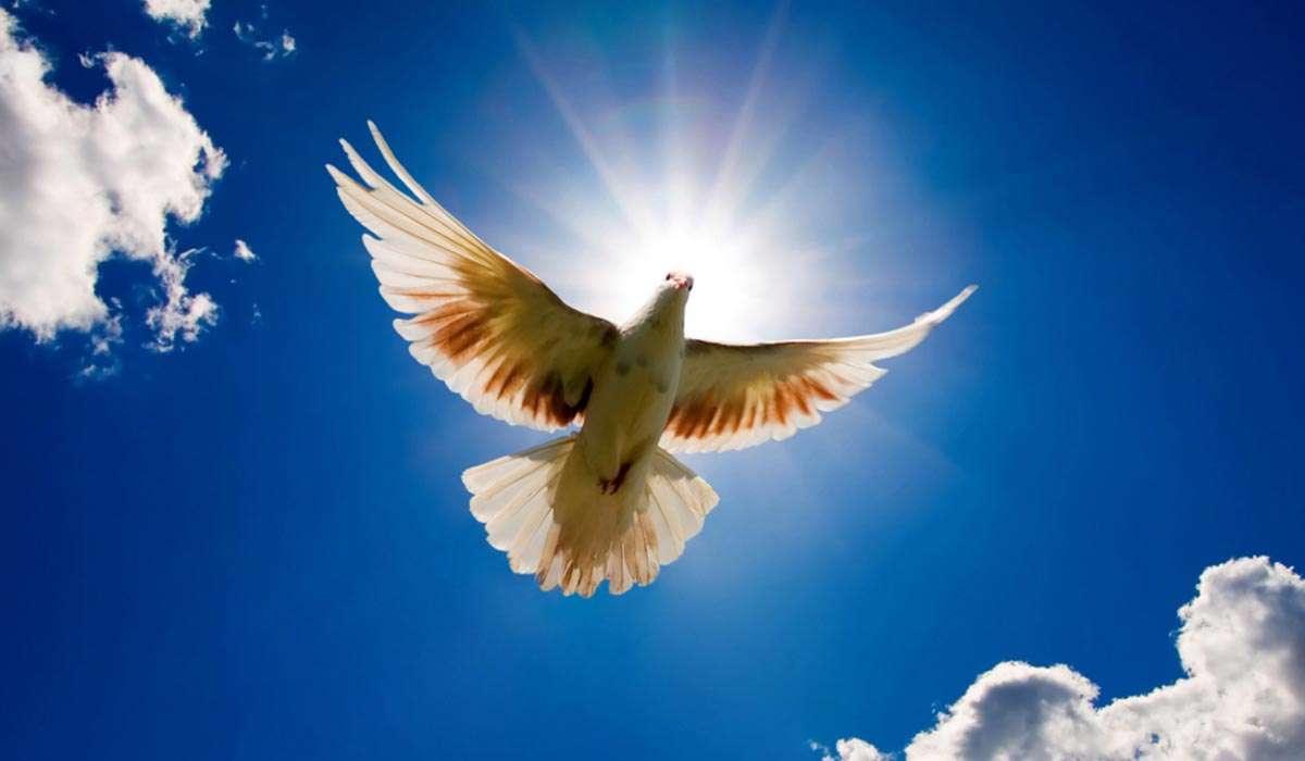 اصل حریت و آزادگی