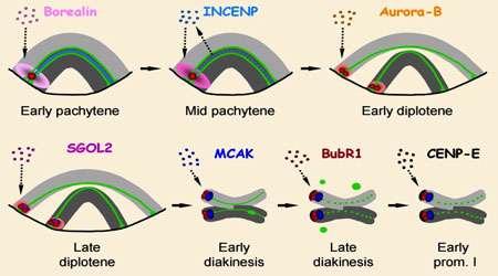پروتئین های متصل به ریز لوله چه (بخش دوم)