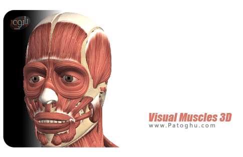 شگفتی های جهان آفرینش/450 عـضله در بدن انسان
