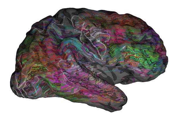 چگونه لغات در مغز ما ذخیره می شود؟