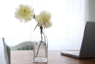 گل خشک، گل و گیاه، فنگ شویی،انرژی منفی، چاقیف لاغری،گل داوودیف گل نیلوفر، مهربانی، آپارتمان، زیبایی،فوت و فن ، دکوراسیون و چیدمان