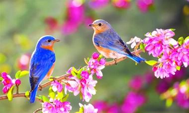 راهکارهای حفظ سلامت در فصل بهار