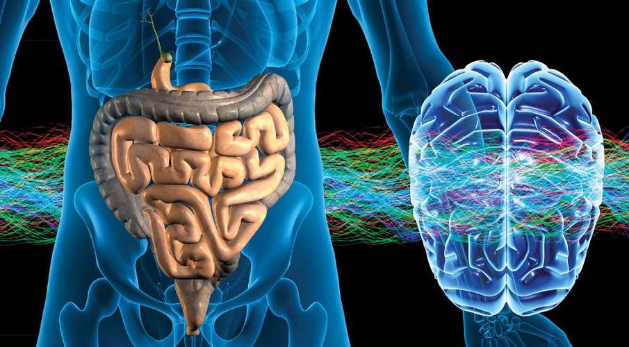 ارتباط روده ها با مغز