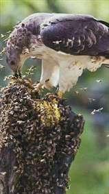 حمله به لانه ی زنبورها