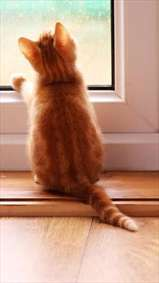 گربه کنار پنجره