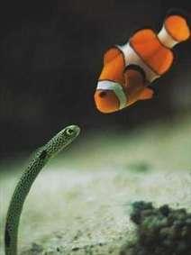 تصویر زیبا از دلقک ماهی