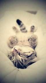گربه بامزه در حال بازی