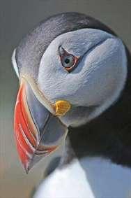 پنگوئن زیبا