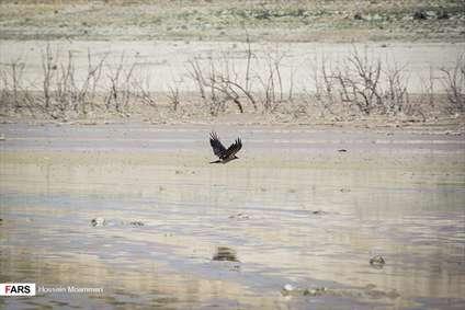 کاهش سطح آب سد «بارزو»