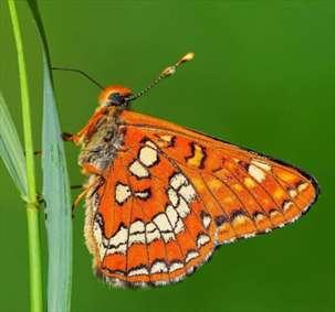 دنیای زیبای پروانهها از دریچهی دوربین