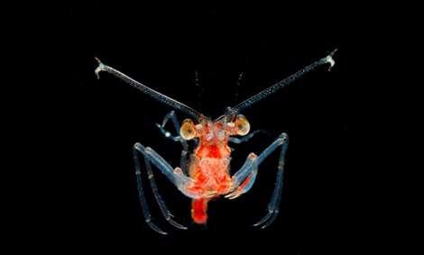 زیبایی خیرکننده پلانکتون ها در اعماق اقیانوس