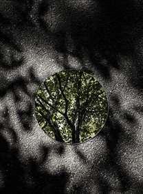ثبت بازتاب طبیعت در قاب آینه