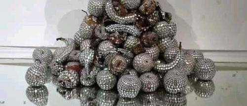 خلق زیباترین جواهرات بامیوه