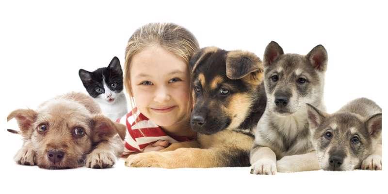 پرورش حیوان در خانه