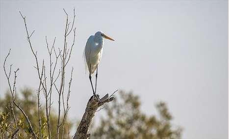 زیبایی شگفت انگیز پرندههای تالاب ایرانی