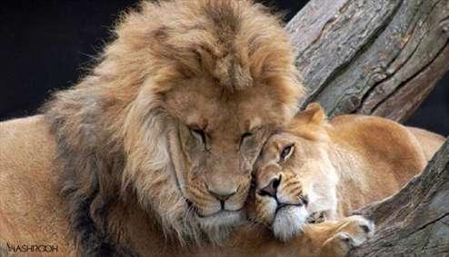 حیوانات هم عاشق می شوند