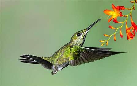 دنیای پرندگان در جریان مسابقه بینالمللی حیات وحش