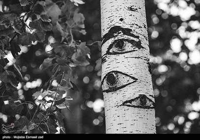 چشم های صنوبر
