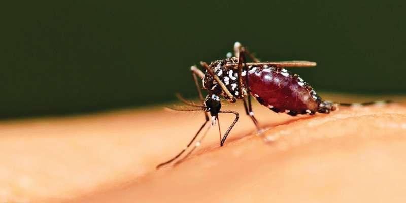 بیماری مالاریا | پیشگیری و درمان