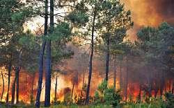 جنگل های ضد حریق