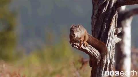 زیبایی یک جهش و پرش از نوع سنجابی