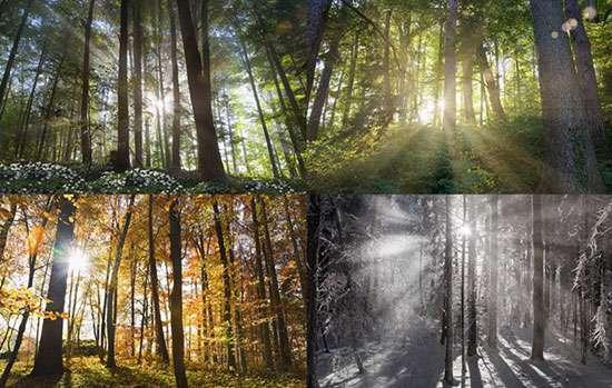 شخصیت، فصل، پاییز، تغییرات دما، آی و هوا، روحیه، خانواده ایرانی