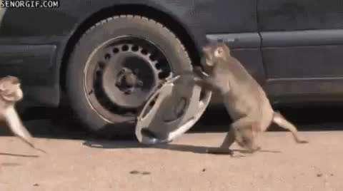 بازیگوشی میمون ها