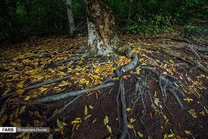 انتهای پاییز