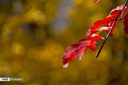 طبیعت پاییزی النگدره