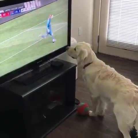 سگ بامزه